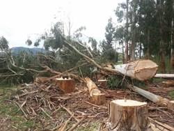 stump removal kiapoi