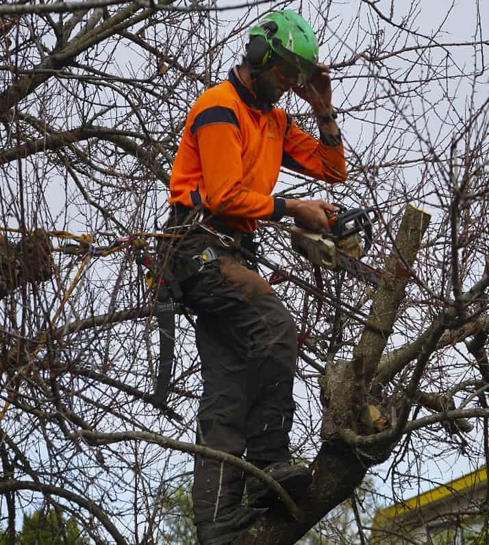Pruning hedges christchurch