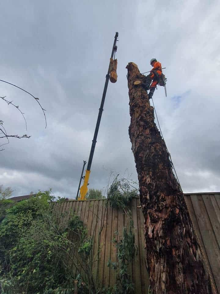 stump removal christchurch