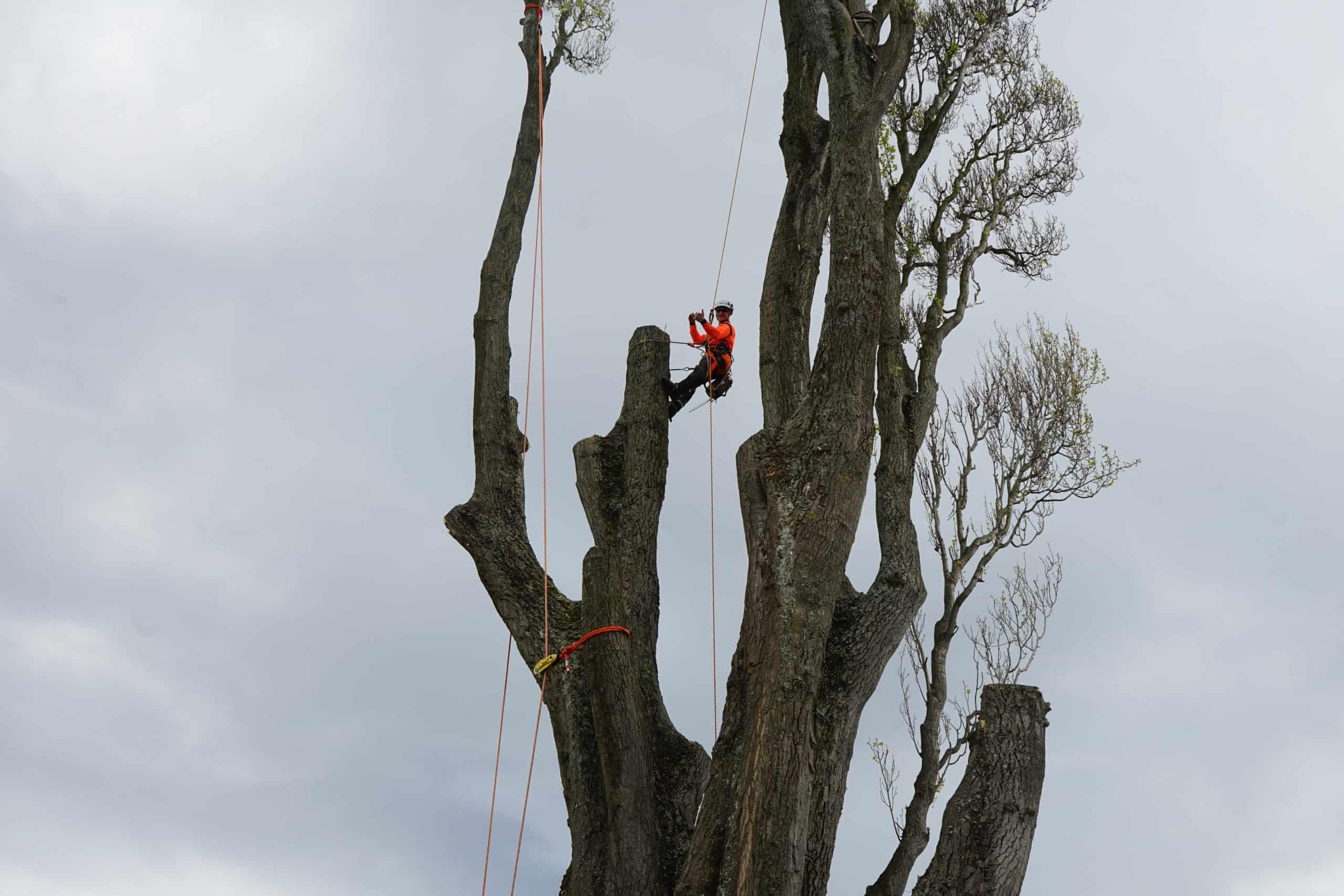 tree felling company kaiapoi