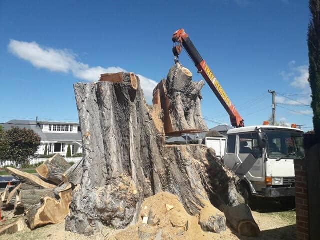 stump removal christchurch