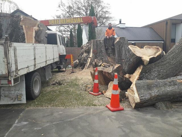 stump removal canterbury